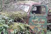 Old dump truck covered by vines and moss in Vintage car wrecking yard