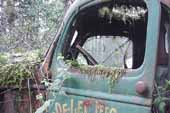 Vintage truck cab door draped with moss in classic car junk yard