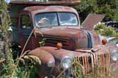 Original 1940's Ford truck parked in old car salvage junk yard